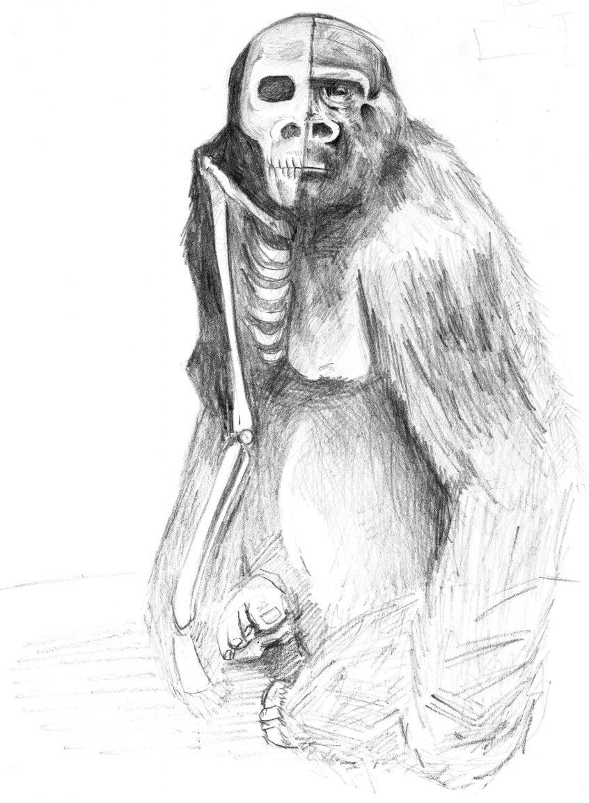 Gorila a lapiz por SCeron | Dibujando
