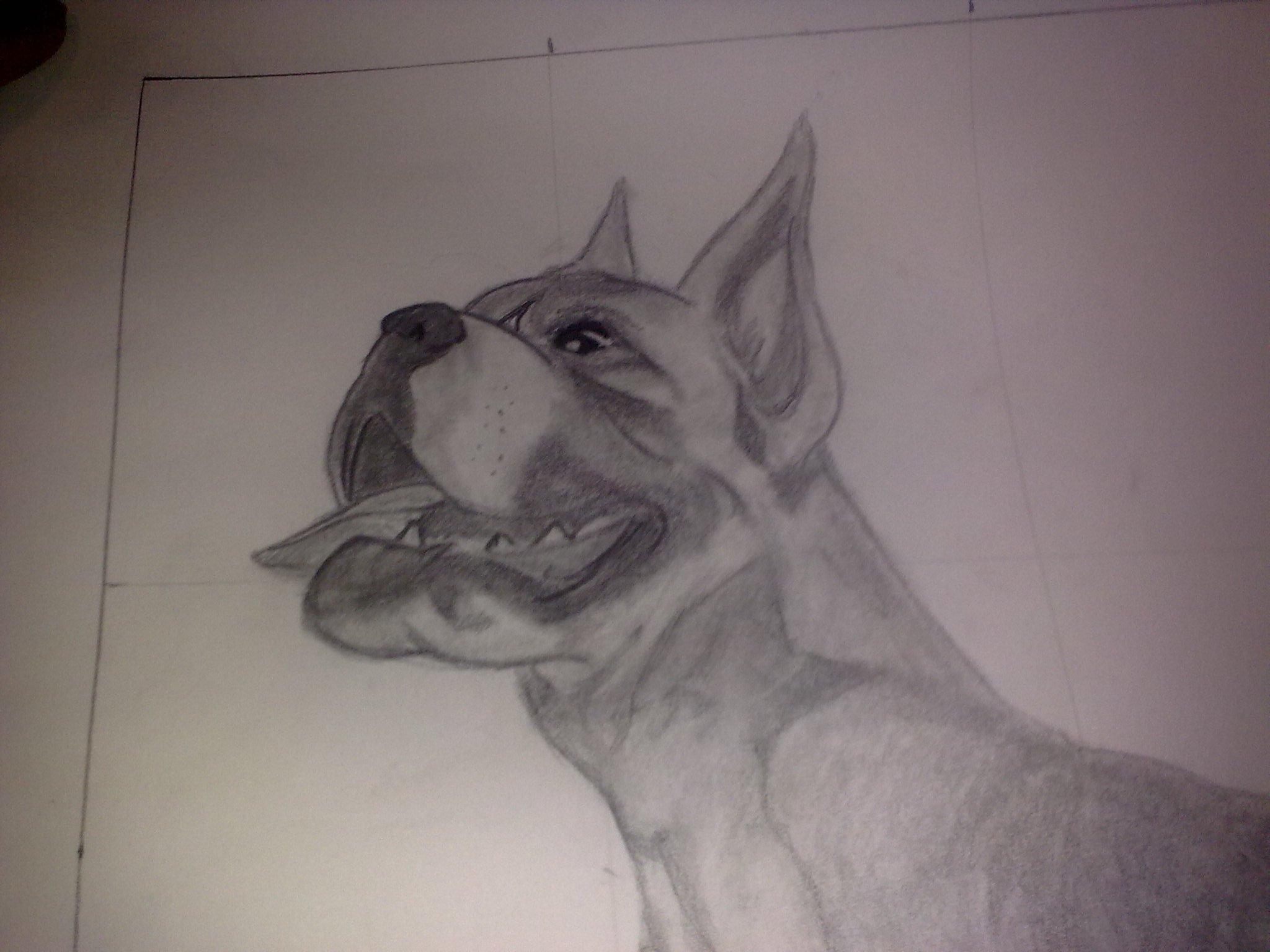 Dibujos a Lapiz De Perros Pitbull