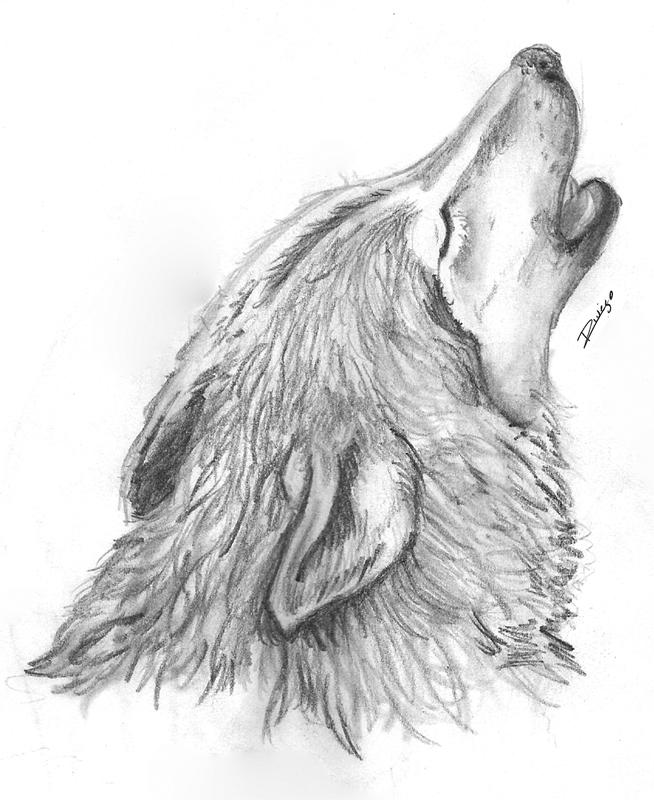 Imagenes de dibujos de lobos a lapiz  Imagui