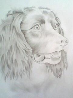 retrato_una_raza_unica_perro_17935.JPG