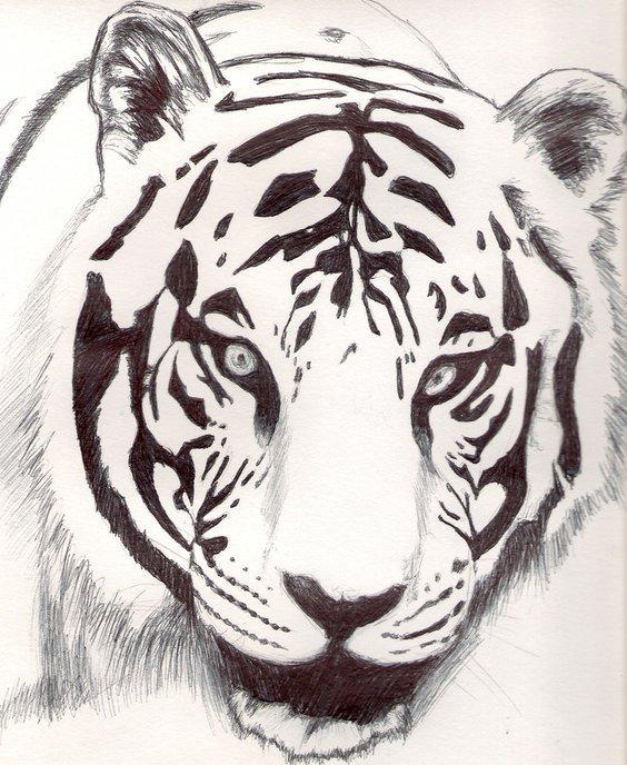 tigre_blanco_19570.jpg