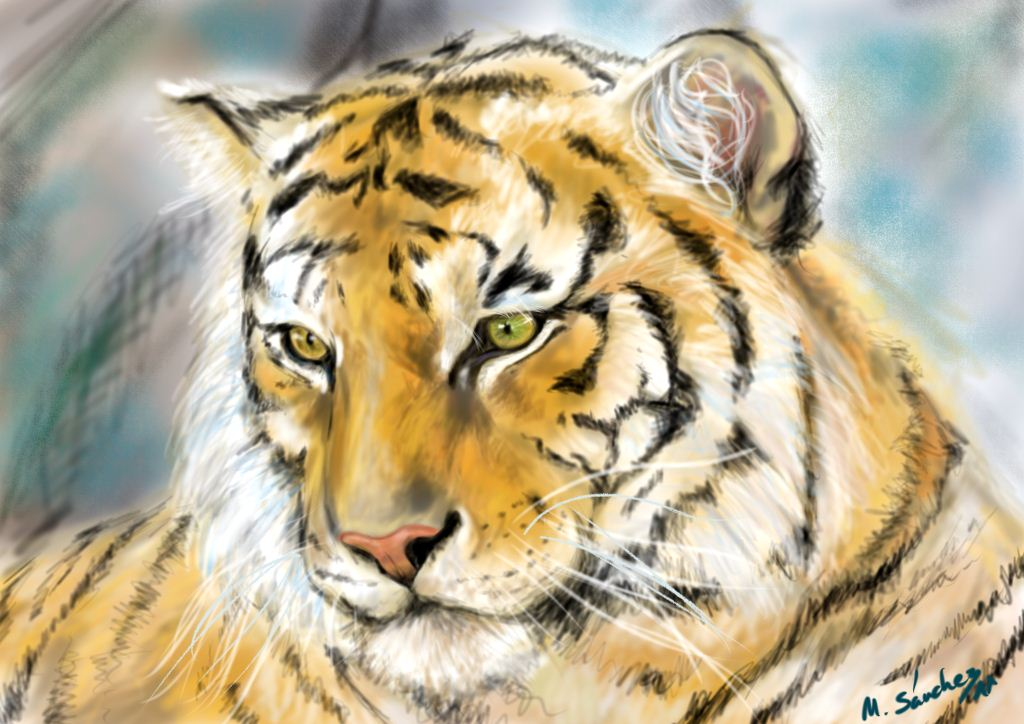 Tigre_20254.jpg