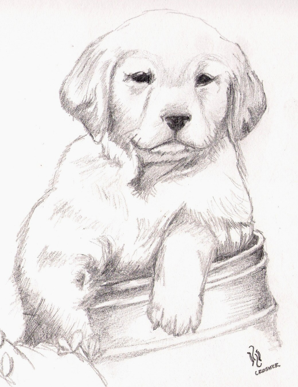 Golden Retriever Bebe Coloring Pages