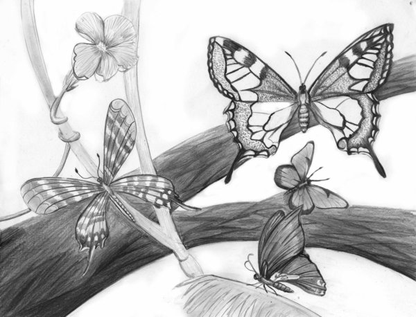 mariposas_25891.jpg
