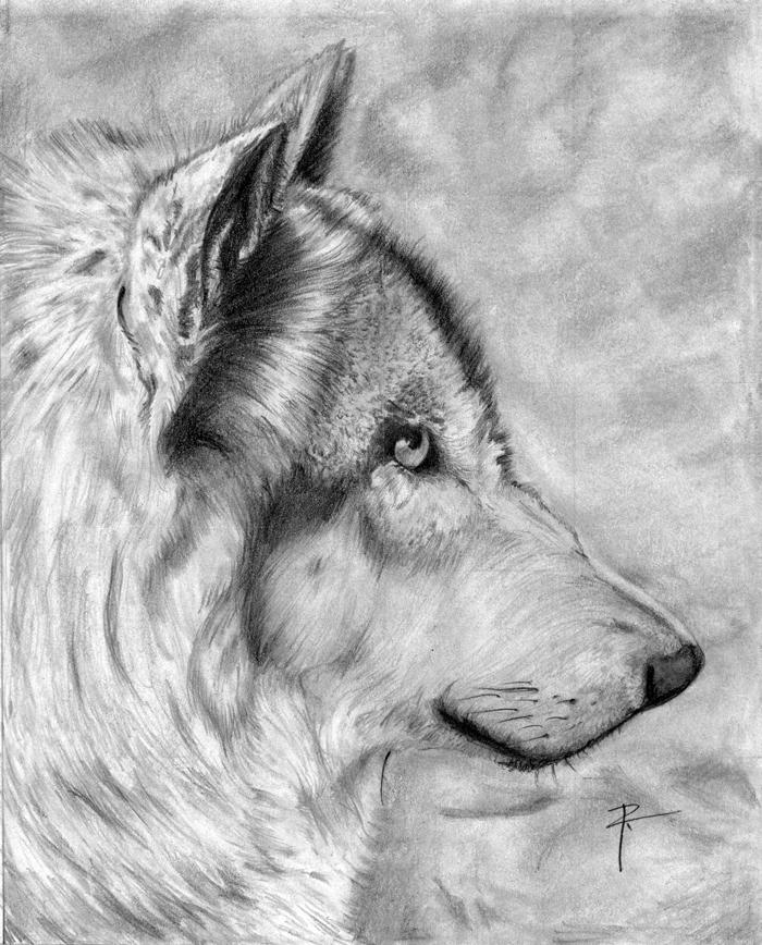 Lobo Por Rivego Dibujando