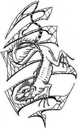 iguana_15027.JPG