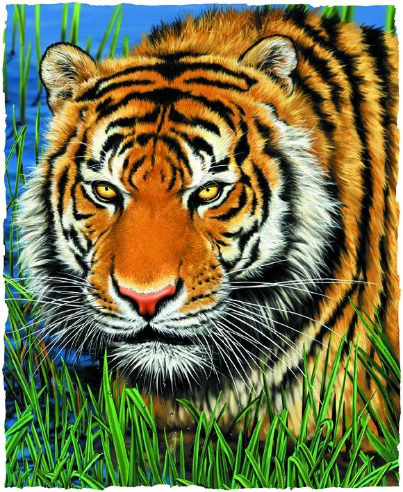 tigre_35849.jpg