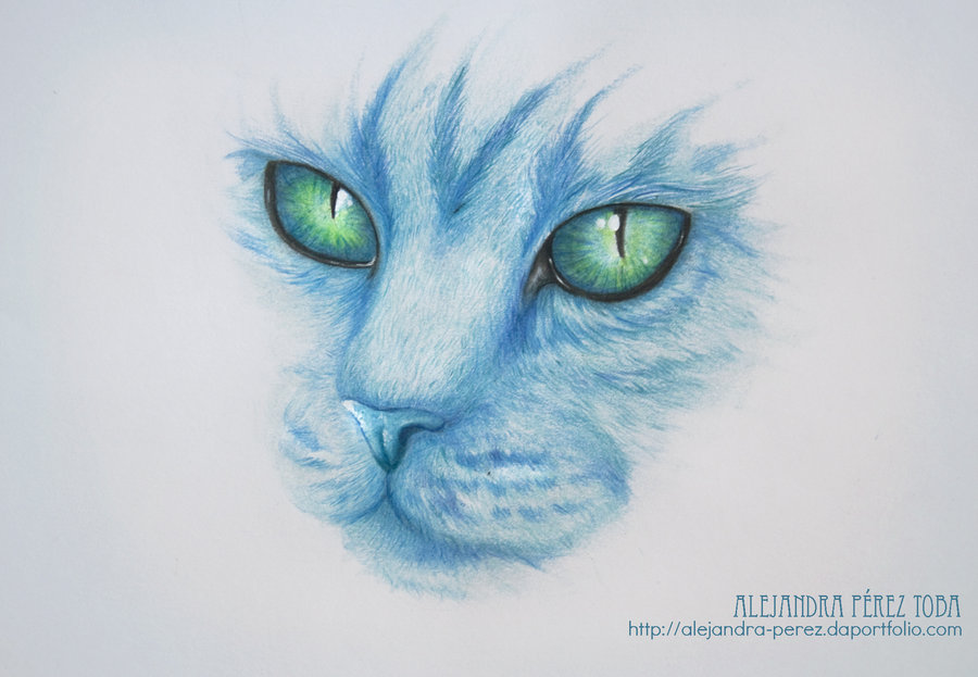 the_blue_cat_36763.jpg