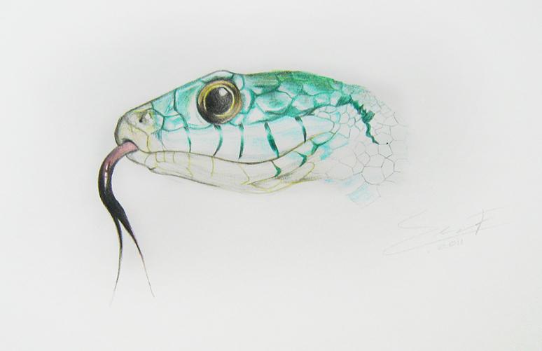 Serpiente En Colores Por Saralong Dibujando
