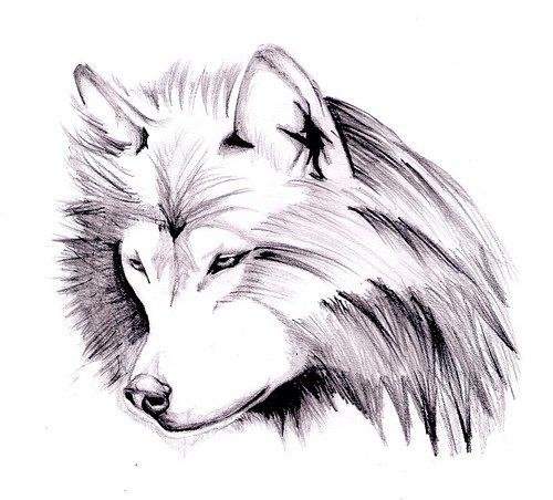 Lobo Por Skineboy Dibujando