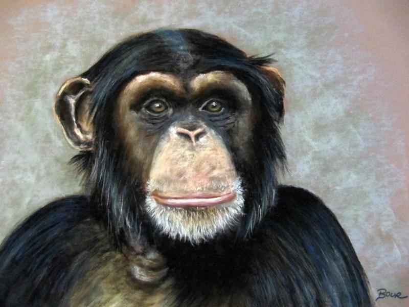 un_chimpanze_45596.jpg