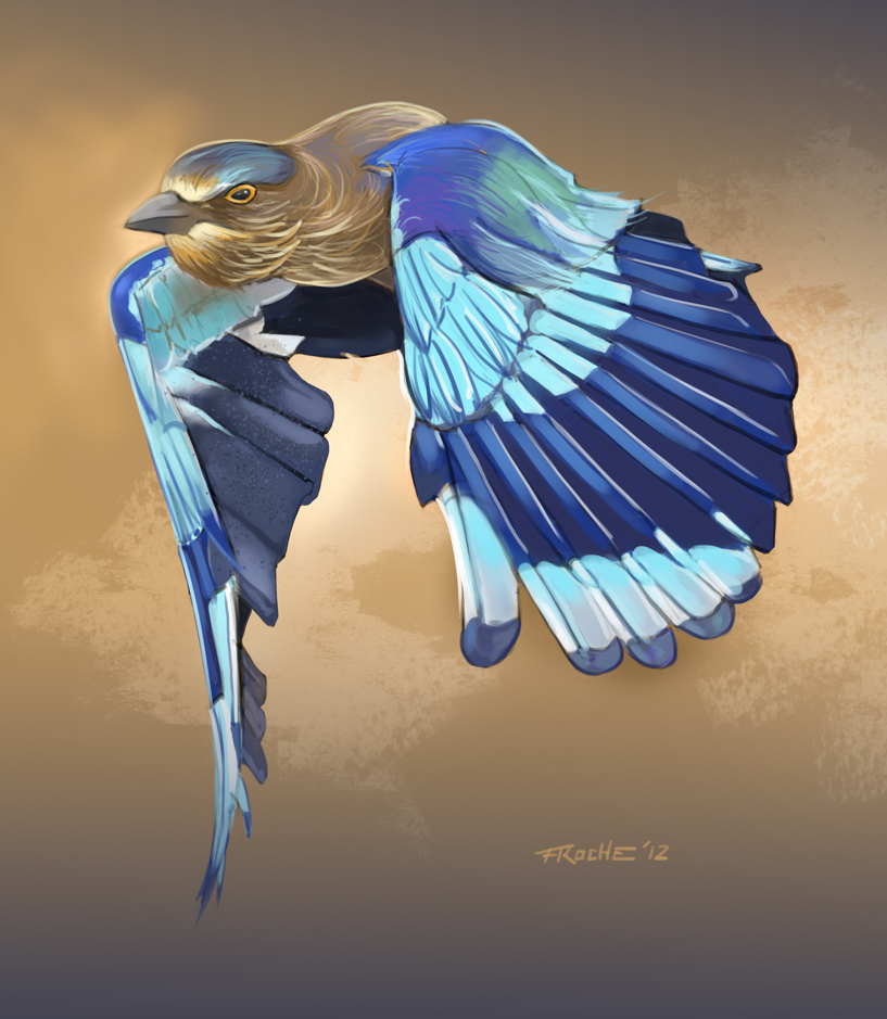 bird_46552.jpg