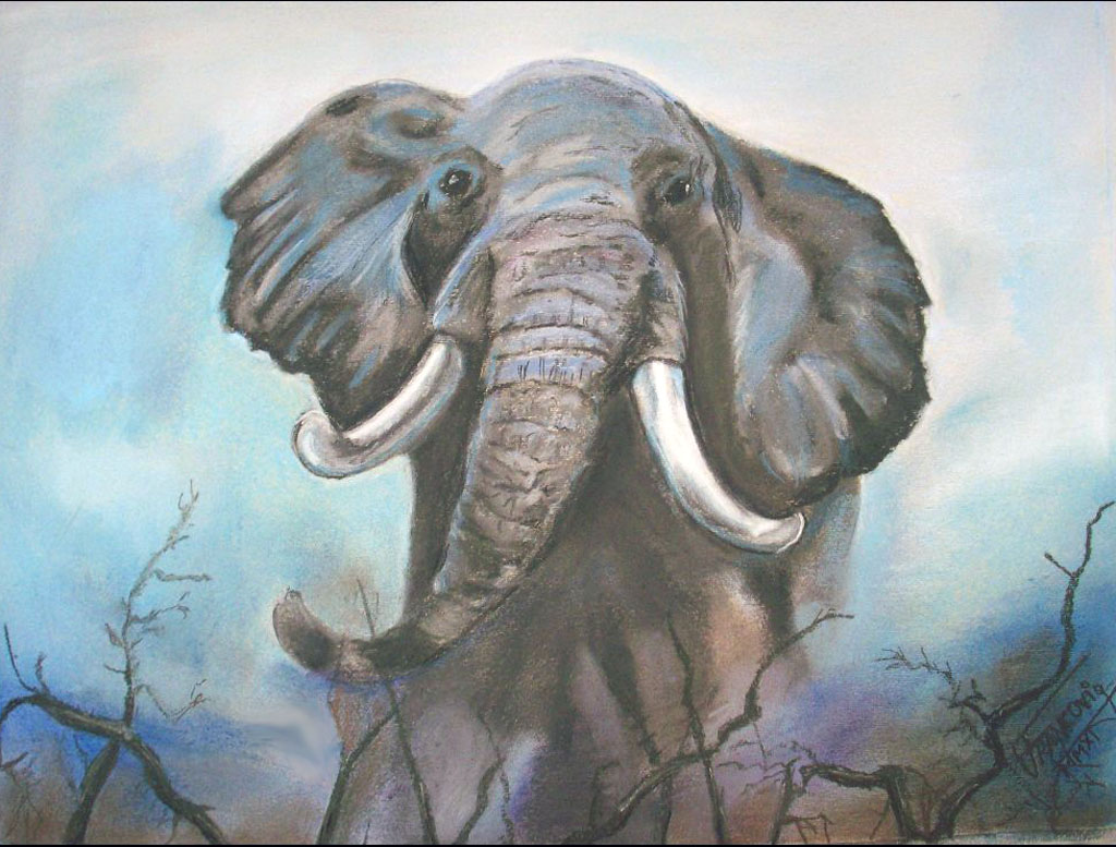 elefante_29578.jpg