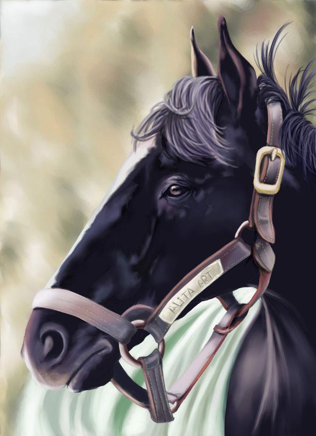 caballo_viejo_29740.jpg