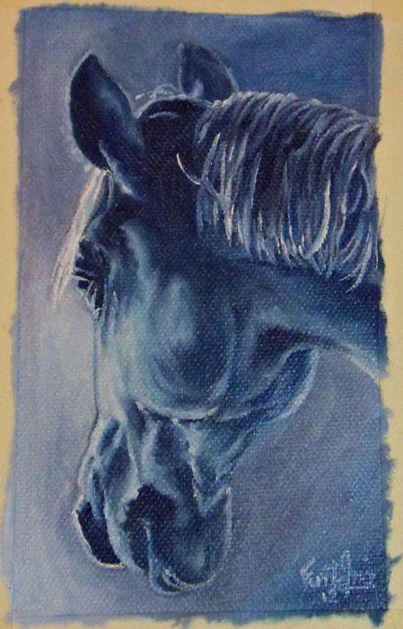 caballo_azulado_30753.jpg