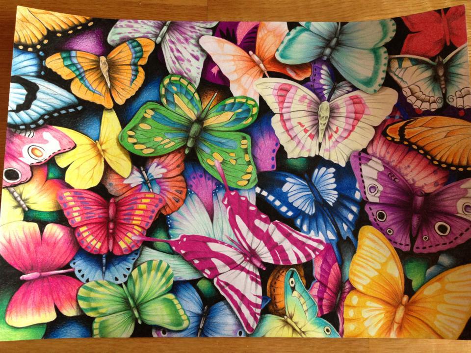 mariposas_muuuy_diversas_54808.jpg