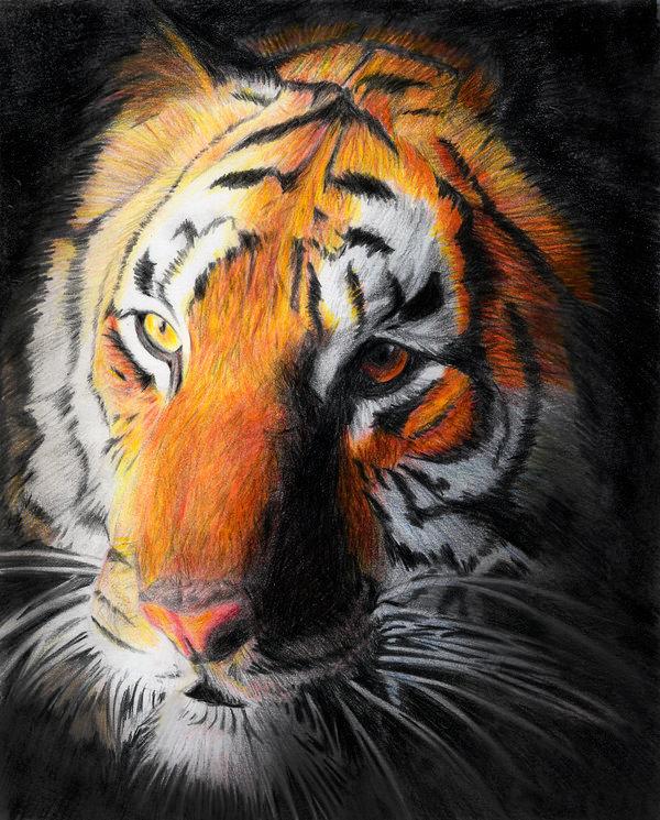 el_ojo_de_tigre_63517.jpg