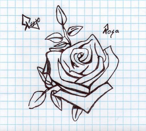 rosa_66234.jpg