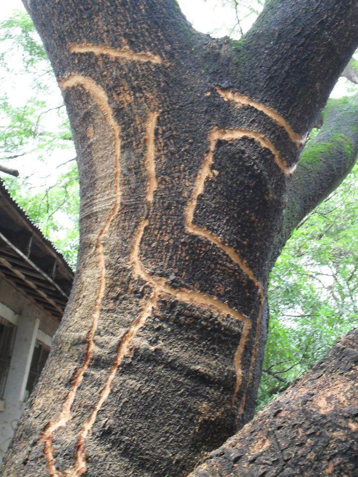 treeup_50179.jpg