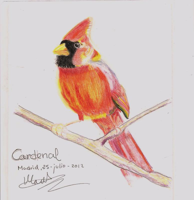 cardenal_51957.jpg