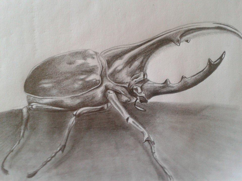 escarabajo_hercules_81278.jpg