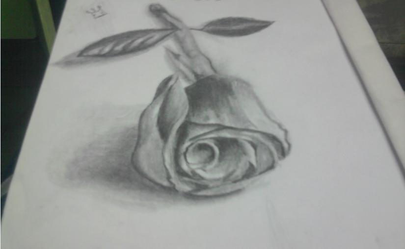rosa_74322.PNG