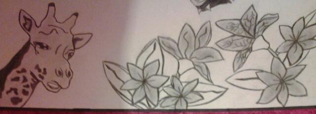 una_jirafa_en_busca_de_flores_74531.jpg