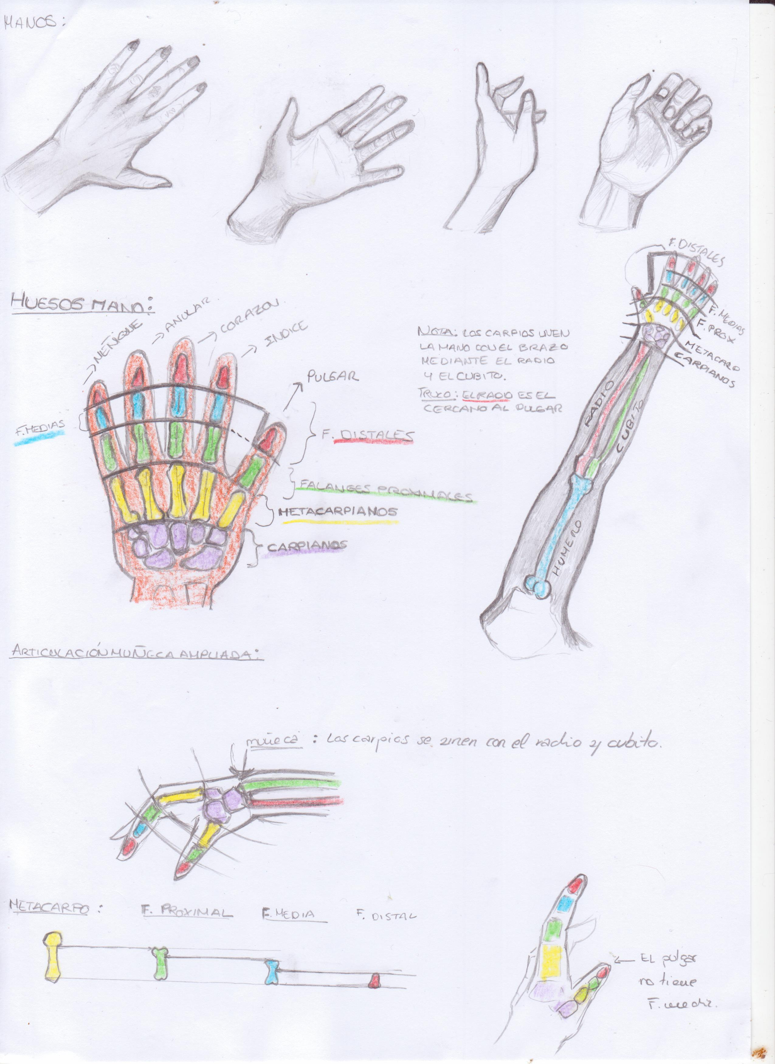 Anatomía Manos por Jense | Dibujando