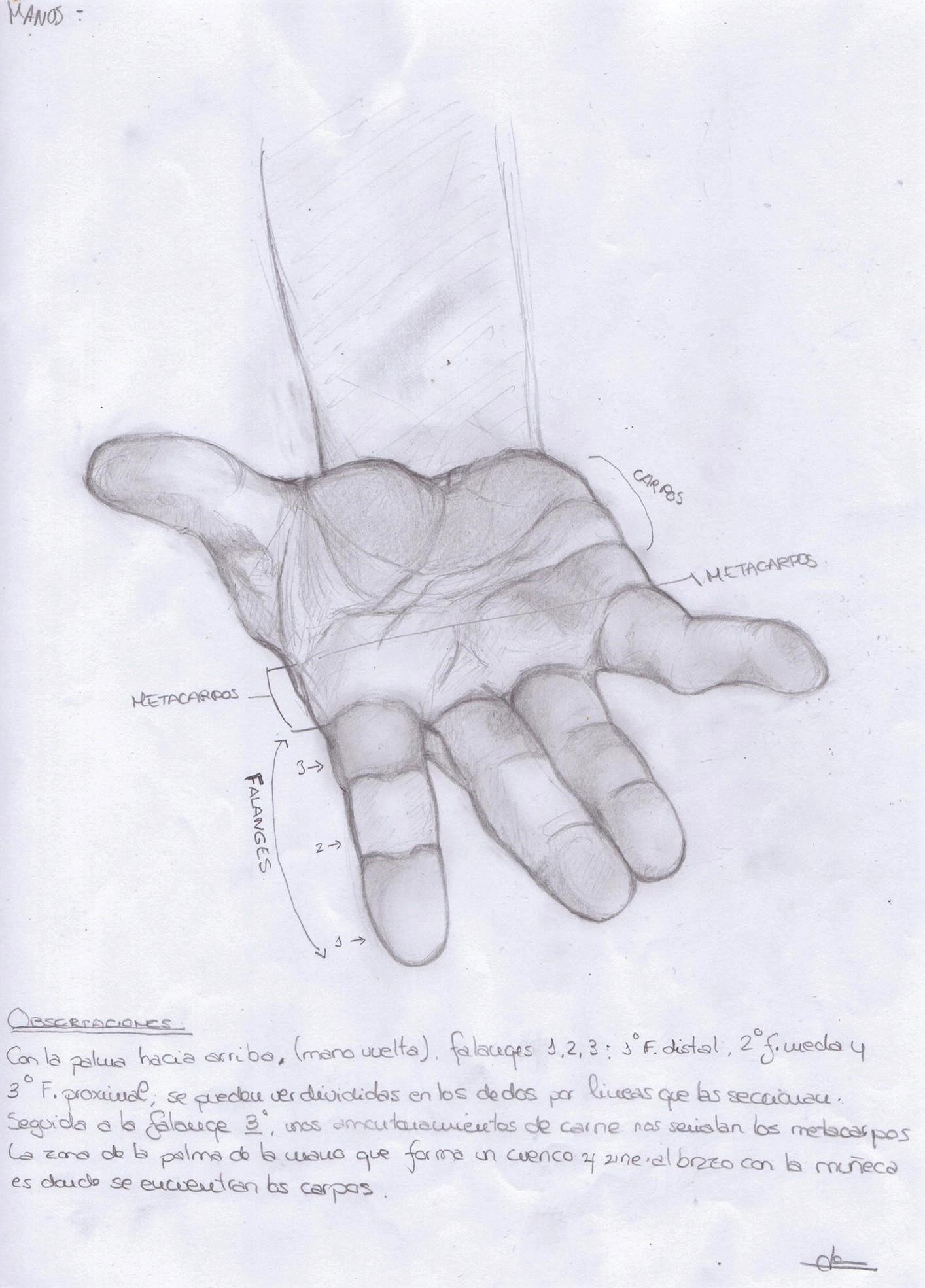 Anatomía Manos 2 por Jense   Dibujando