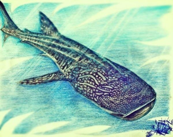 tiburon_Ballena_316085.jpg