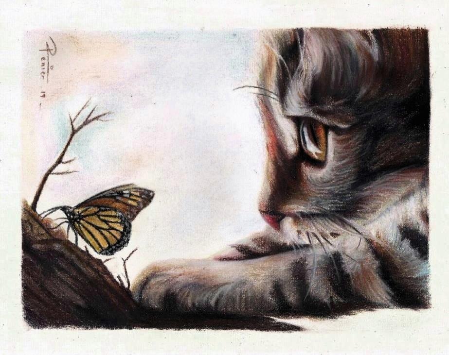 gato_y_mariposa_316766.jpg