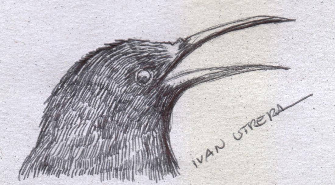 bird17_330595.jpg