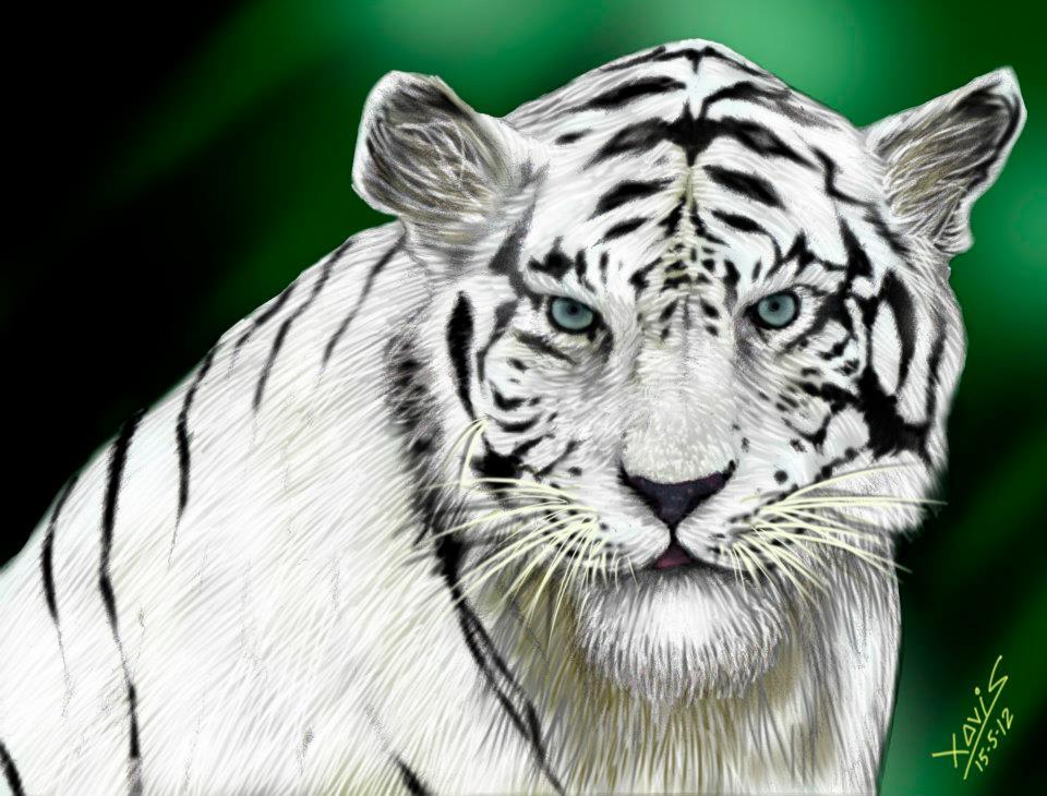 tigre_299086.jpg