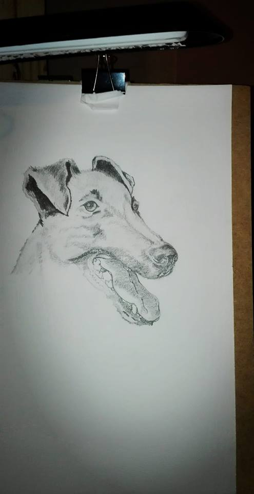 Dog_341707.jpg