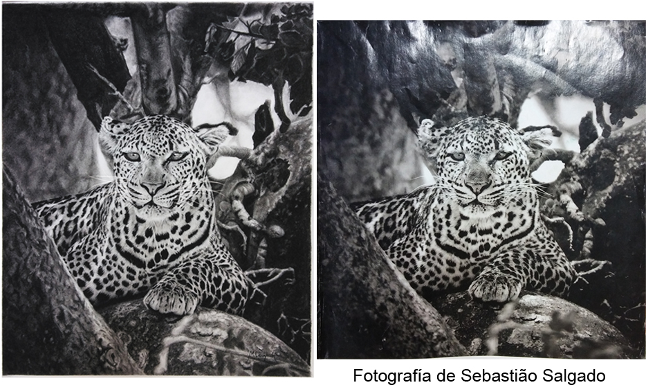 Dibujo_vs._FotografYua_359613.jpg