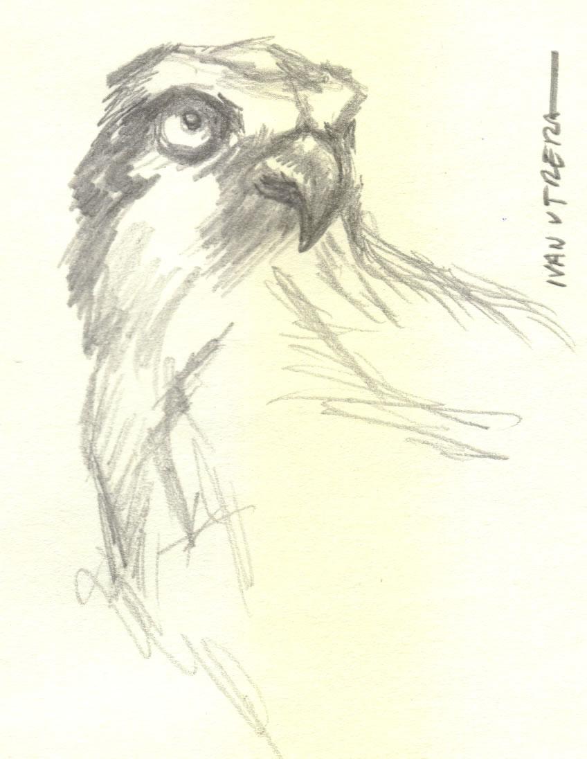 bird15_346273.jpg