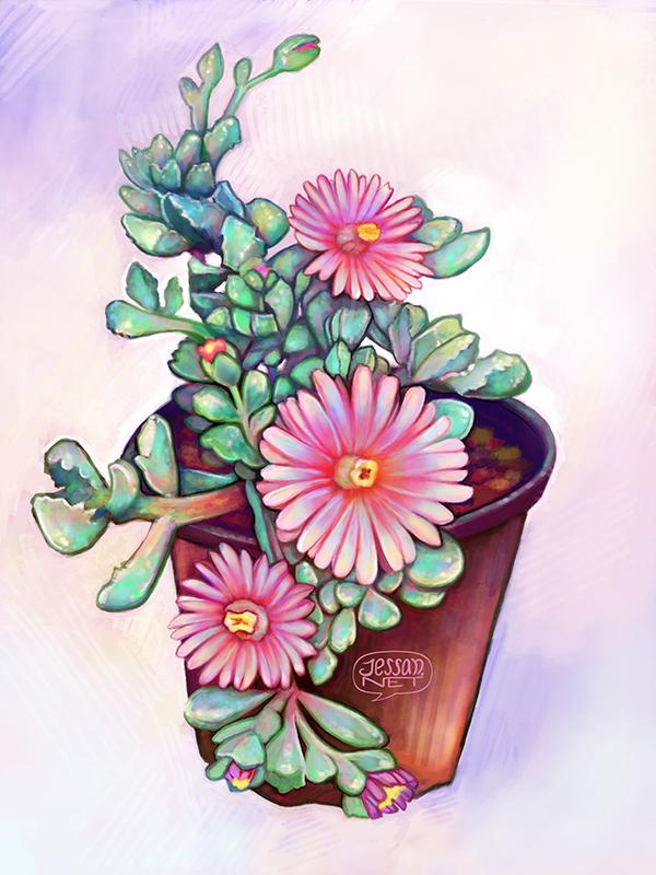succulents_flowers_jessan_374688.jpg