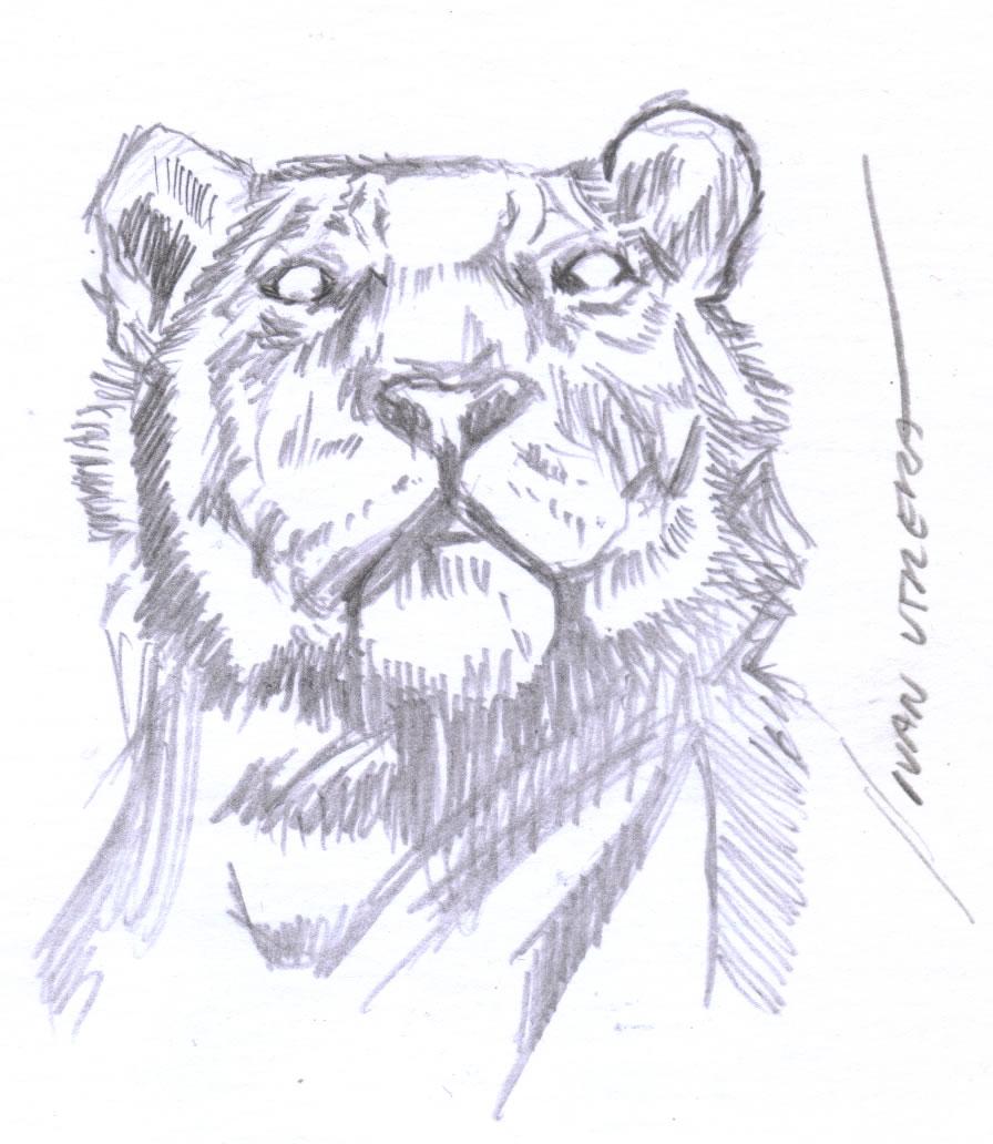 tiger07_408501.jpg
